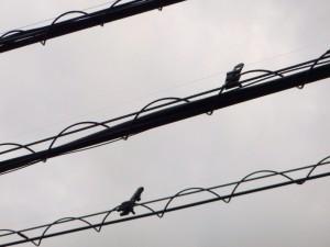 鳥の糞害対策