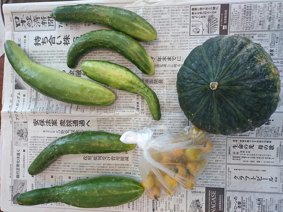 無農薬野菜