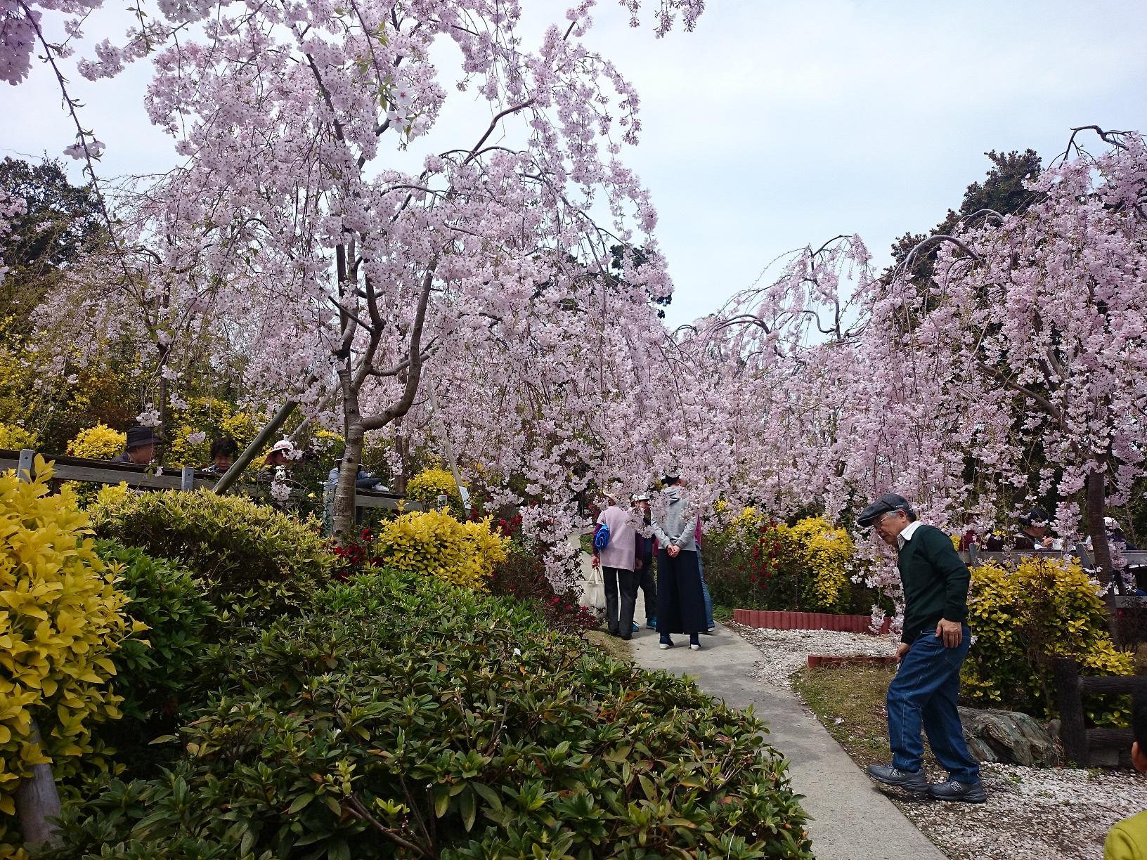 花見山遊歩道