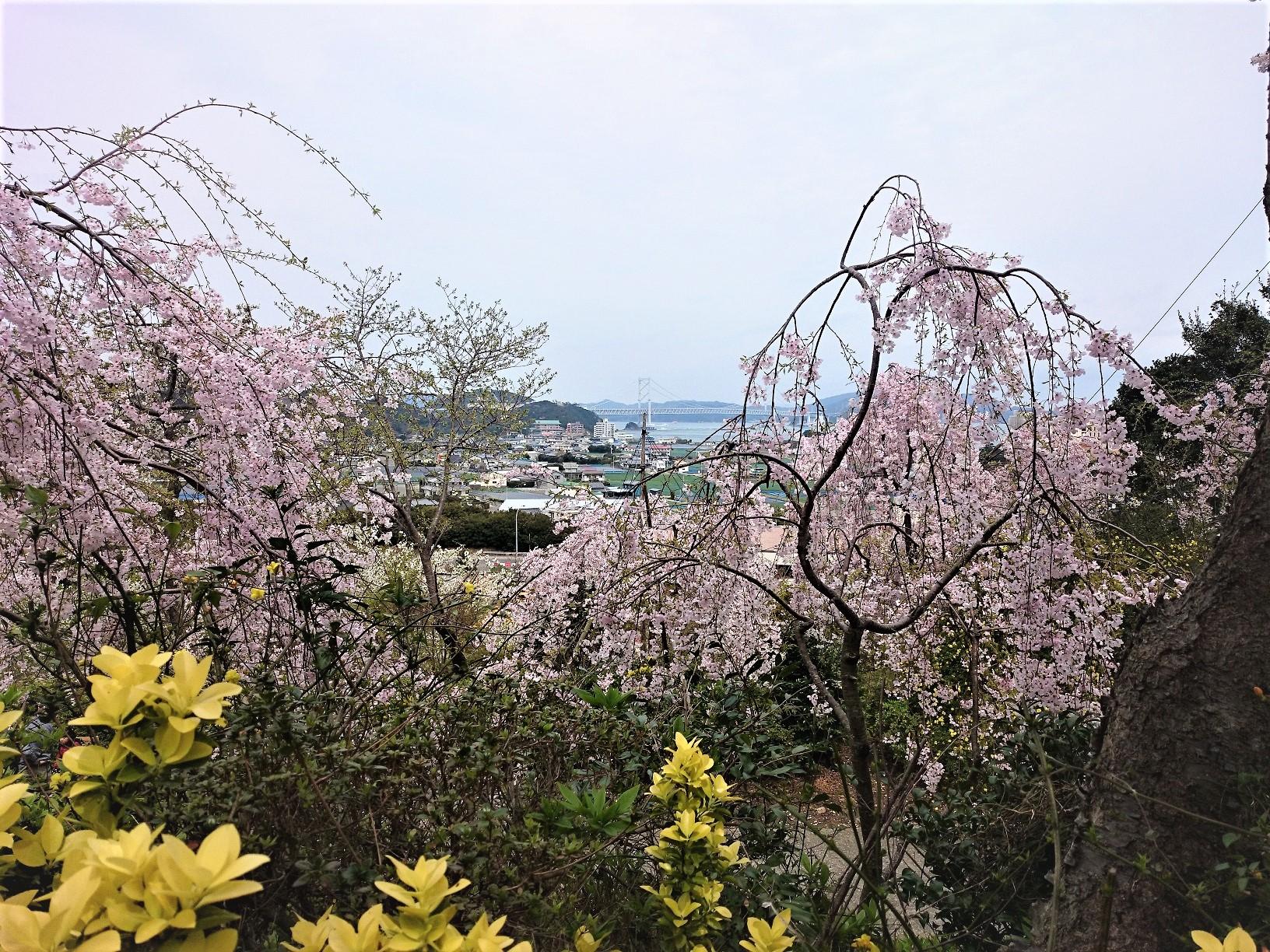 花見山から見る鳴門海峡